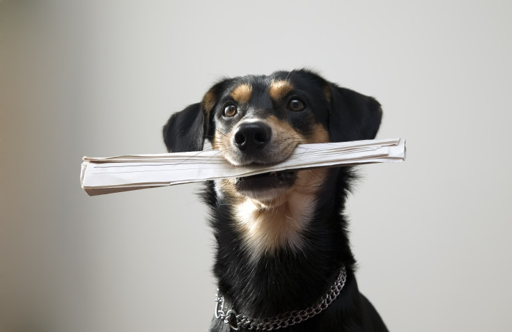 Dog with metal chain is holding newspaper