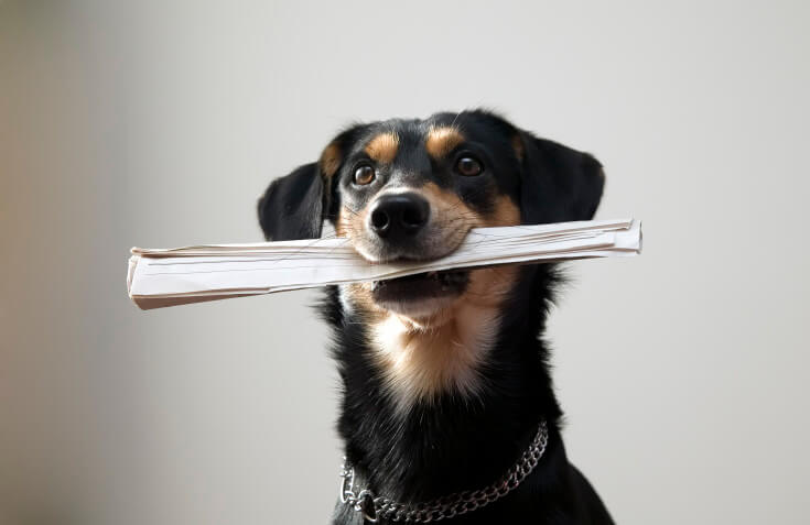 don't forget to include your pets in your separation agreement family law toronto